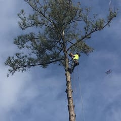 Arbor-X-Tree-Service-www.arborx.com-Trimming-in-Wilmington-NC